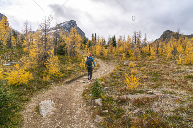 Female Hiker Walking Through Paradise Valley and Golden Larches