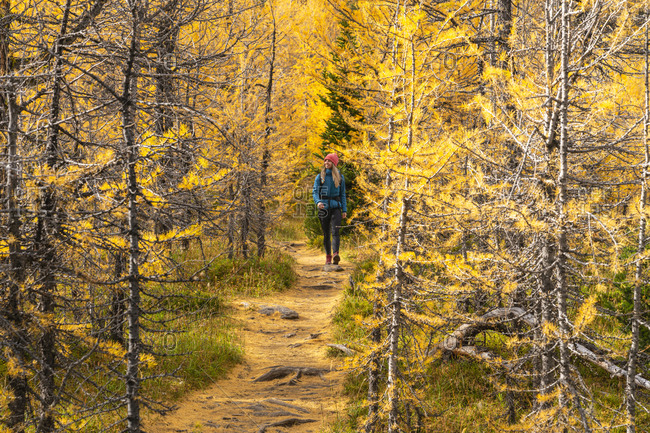 Hiking Through Larches During Autumn in the Canadian Rockies