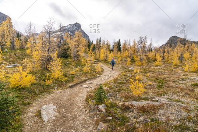 Hiking Paradise Valley in Banff Alberta Above Lake Louise