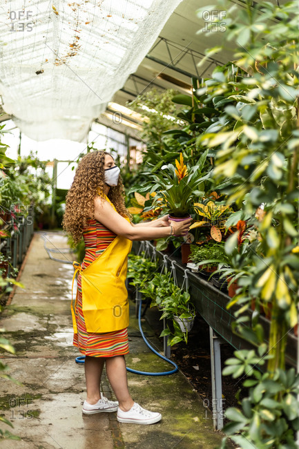 Young blonde adult woman with curly hair and a yellow apron checking the plants in her garden shed with face mask