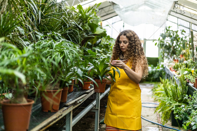 Young blonde adult woman with curly hair and a yellow apron checking the plants in her garden shed