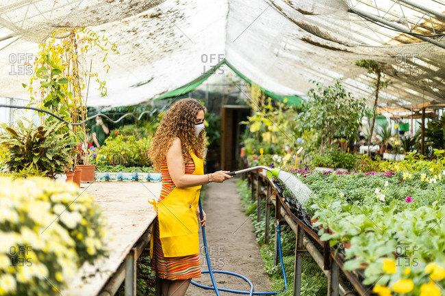 Young blonde adult woman with curly hair and a yellow apron watering the plants and flowers, wearing a face mask