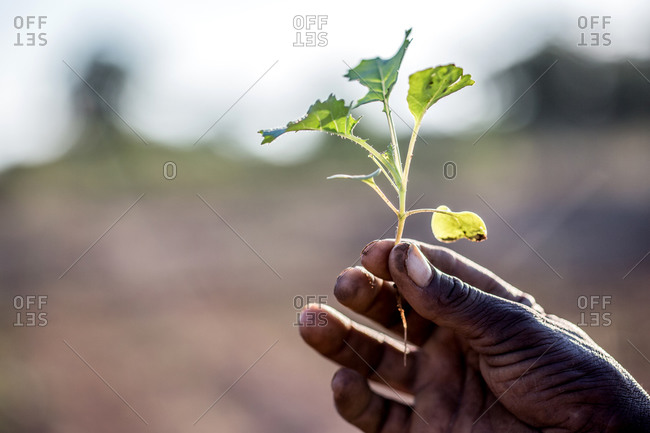 Person holding a sapling, signifying a new life
