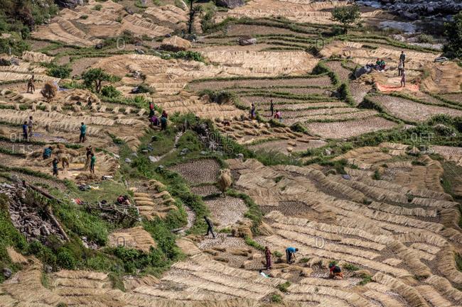 May 18, 2012: People working in a field in Kathmandu, Nepal