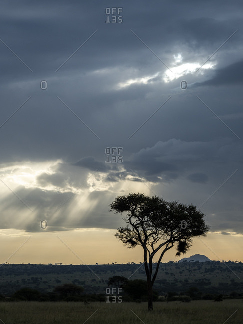 Storm clouds and God's rays in Tarangire National Park, Tanzania, East Africa, Africa