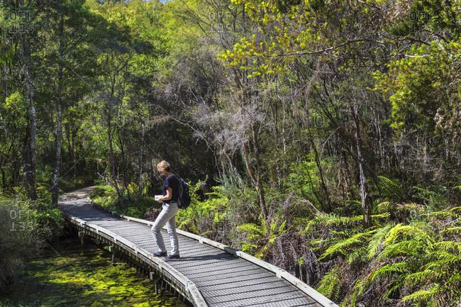 Hiking track to Te Waikoropupu Springs, Golden Bay, Tasman, South Island, New Zealand, Pacific