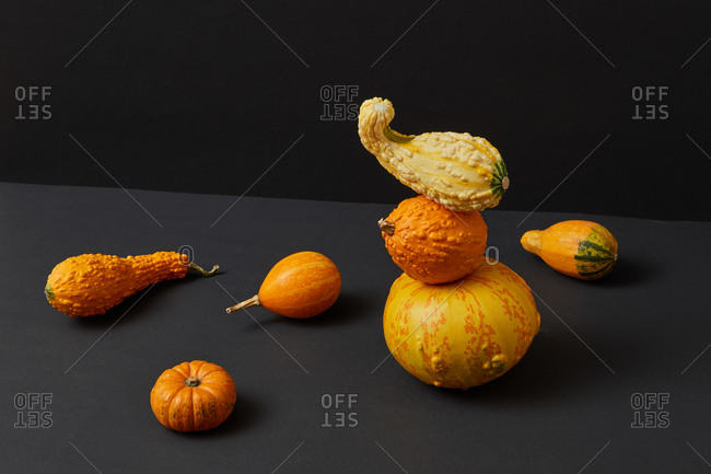 Vegetables balancing floating composition from freshly picked natural organic pumpkins different shapes and size against duotone dark background, copy space. Vegan concept. Halloween concept.