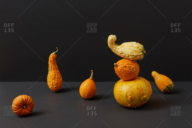 Flying and balancing composition from freshly picked harvest of natural organic pumpkins different shapes and size against duotone dark background, copy space. Vegan concept. Halloween concept.