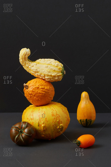 Vegetables balancing stack from fresh natural organic pumpkins different shapes and size and two tomatoes against duotone dark background, copy space. Vegan concept. Halloween concept.