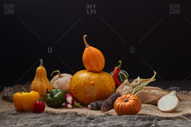 Harvest composition from different freshly picked homegrown vegetables pumpkins, pepper, tomato, radish and corn ears on canvas table against black background, copy space. Vegan healthy food concept.