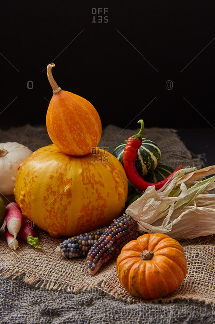Harvest still life from different freshly picked homegrown vegetables pumpkins, corn ears, chili pepper and radish on canvas table against black background, copy space. Vegan healthy food concept.