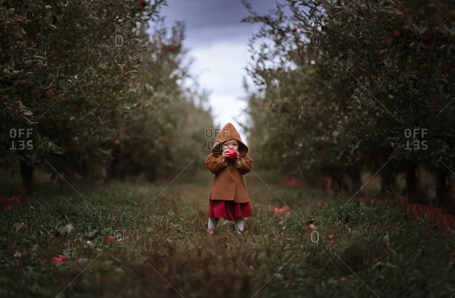 Little girl standing in an apple orchard, surrounded by apple trees, taking a bite of an apple