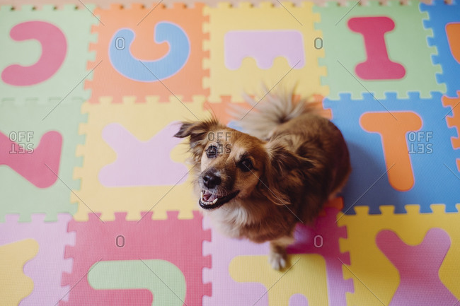 Cute dog sitting on colorful puzzle playmat