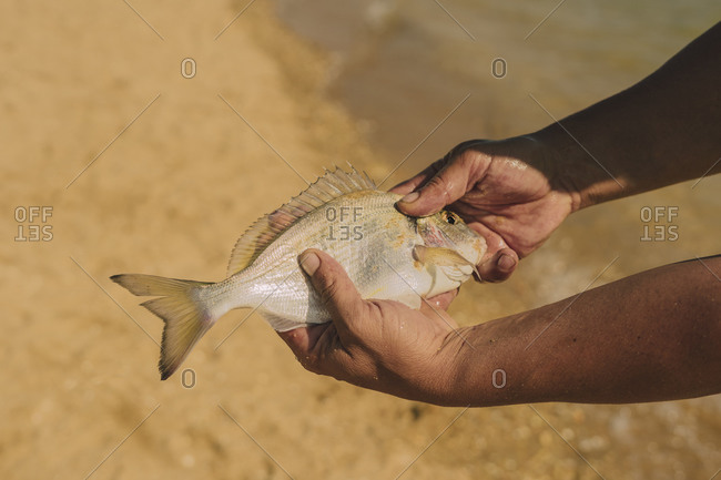Close-up of man hands holding fish at beach during sunny day