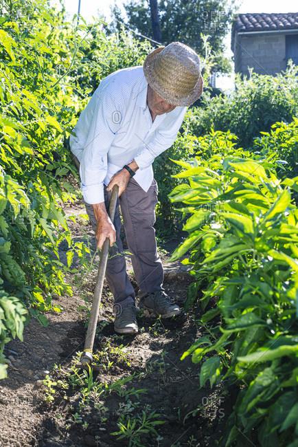 Senior man wearing hat shoveling in vegetable garden
