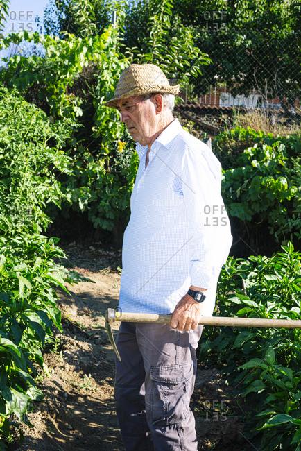 Senior man wearing hat holding shovel while standing in vegetable garden
