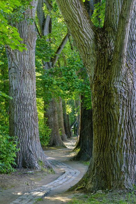 Paved footpath winding between trees in English Garden