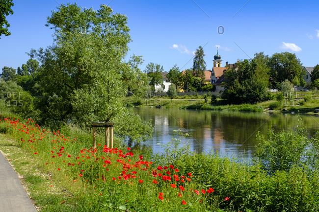Germany- Bavaria- Adelsdorf- Regensburg- Red wildflowers blooming along bank of Regen river in summer