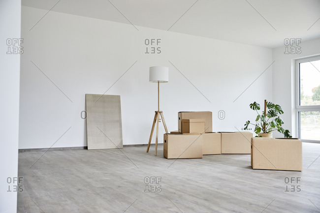 Empty room with many cardboard and potted plant