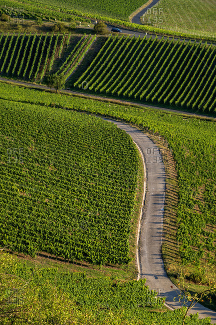 Scenic view of road amidst vineyard during sunny day