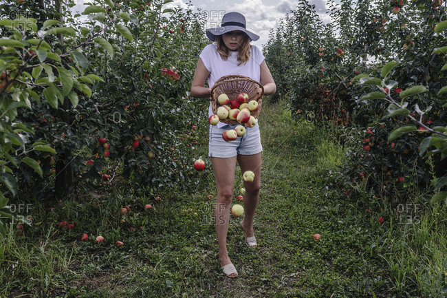 Apples falling from basket held by woman in orchard