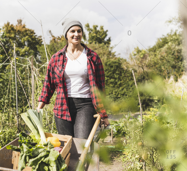 Young woman carrying wheelbarrow with vegetables while walking in community garden