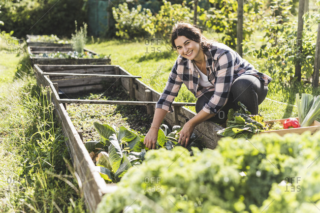 Smiling young woman picking vegetables from raised bed in community garden
