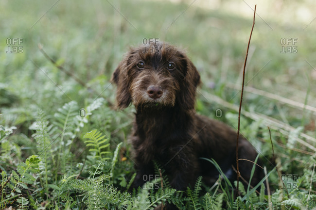 Cute puppy sitting on grass at backyard