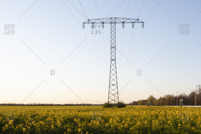 Rape field, electricity pylon wide shot