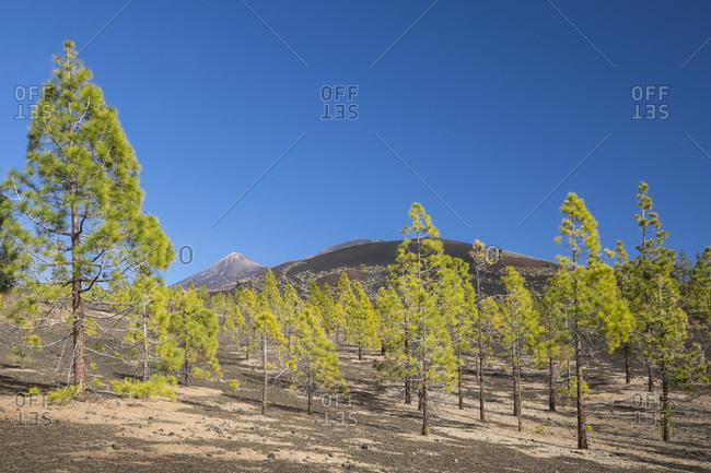 View at the mirador samara of the volcanoes picot del teide (3718 m) and montana de la botija (2122 m), el teide national park, unesco world heritage, tenerife, canary islands, Spain