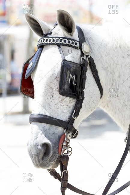 April 28, 2016: horse with halter, carriage, festival, traditional costume, tradition, culture, customs, el Puerto de Santa maria, andalusia, Spain, Europe
