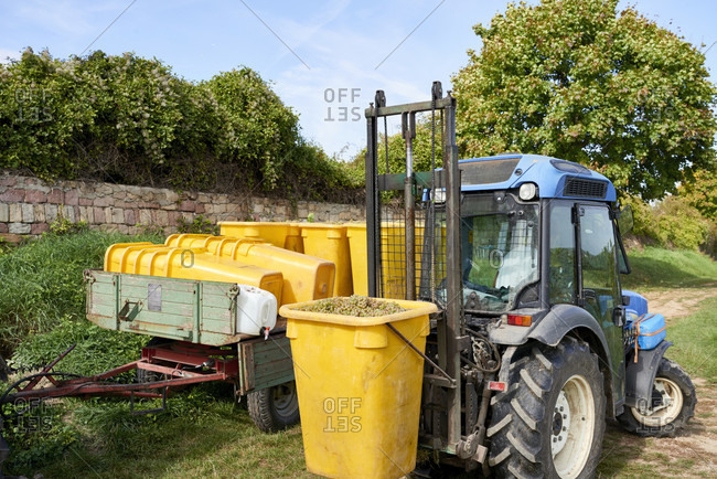 Grape harvest, narrow-track tractor with lifting device next to trailer, filled and empty collection containers, in front of dry stone wall
