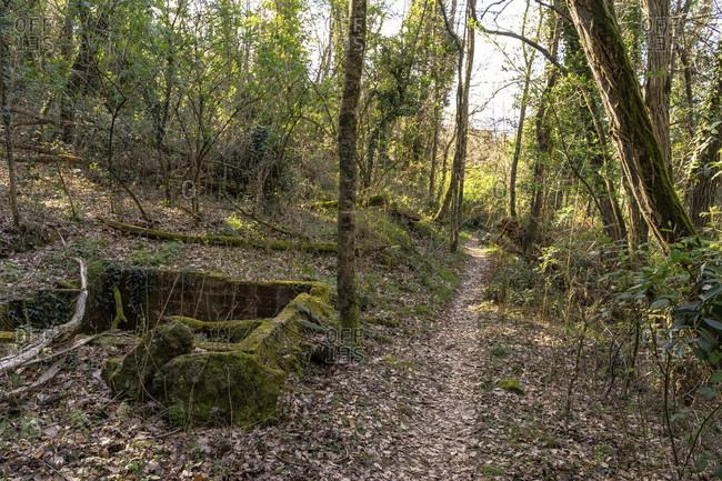 Europe, Spain, catalonia, girona province, garrotxa, olot, narrow hiking trail through the mountain forest at olot