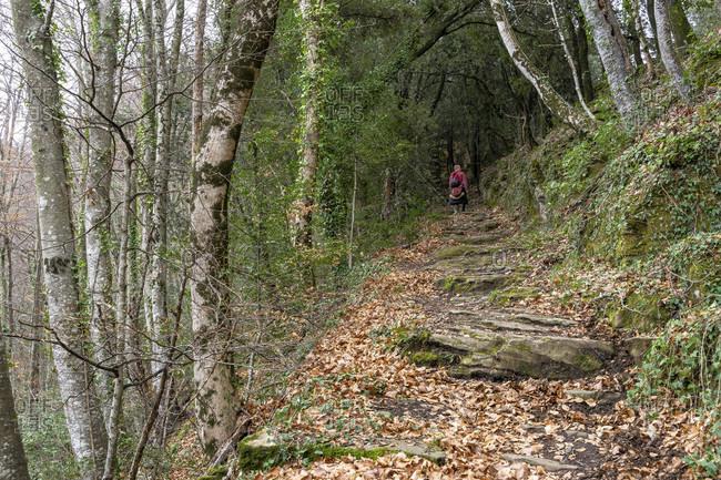 Europe, spain, catalonia, girona province, garrotxa, santa pau, hikers on the climb to the sanctuary of santa maria de finestres