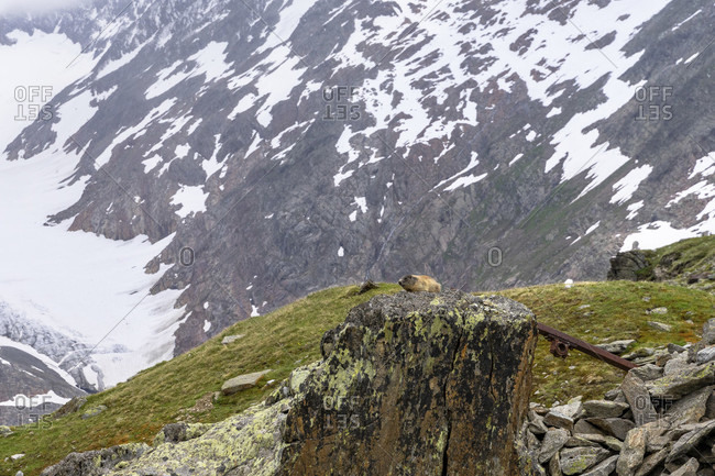 Europe, austria, tyrol, otztal alps, otztal, obergurgl, marmot on a boulder in the ascent to the ramolhaus