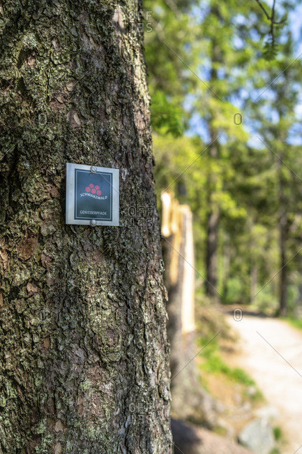 June 3, 2019: europe, germany, baden-wuerttemberg, black forest, path marking on a tree at mummelsee