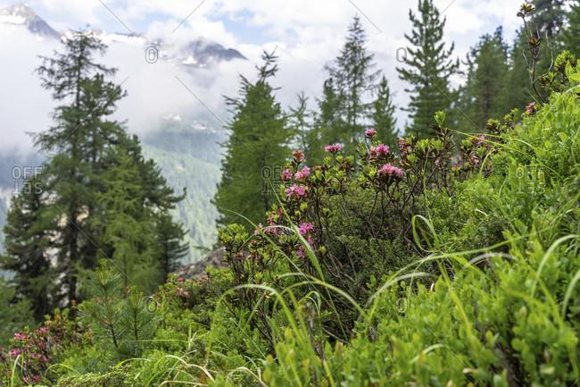 Europe, austria, tyrol, otztal alps, otztal, idyllic mountain landscape above zwieselstein in the otztal