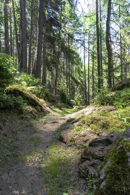 Europe, austria, tyrol, otztal alps, otztal, otztaler urweg in the mountain forest above solden