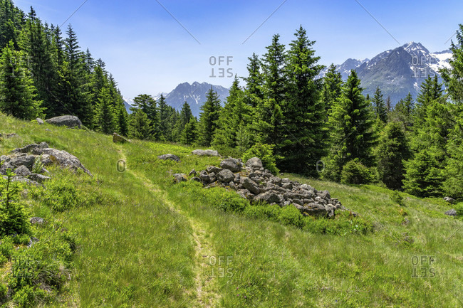 Europe, austria, tyrol, otztal alps, otztal, lush mountain meadow between niederthai and längenfeld with a view of the otztal mountains