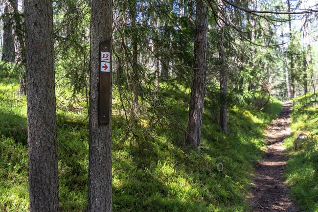 Europe, austria, tyrol, otztal alps, otztal, path marking of the otztaler urweg on a tree in the mountain forest between sautens and roppen