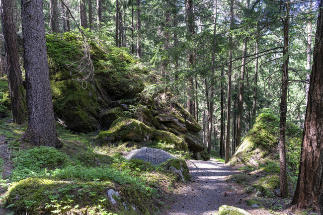 Europe, austria, tyrol, otztal alps, otztal, rockfall area in the mountain forest on lake piburger