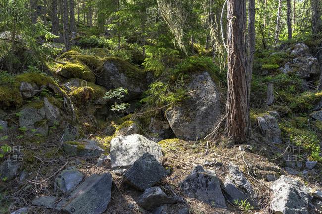 Europe, austria, tyrol, otztal alps, otztal, rockfall area in the mountain forest near kofels