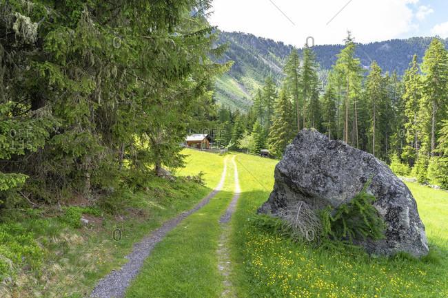 Europe, austria, tyrol, otztal alps, otztal, forest path between wurzbergalm and kofels