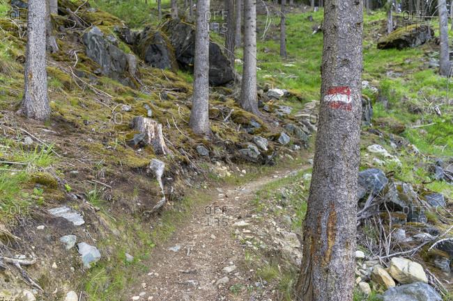 Europe, austria, tyrol, otztal alps, otztal, path in the mountain forest above längenfeld