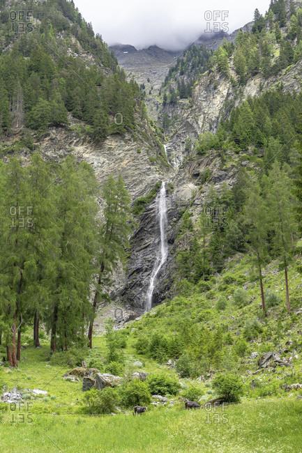 Europe, austria, tyrol, otztal alps, otztal, waterfall in the mountain forest near aschbach