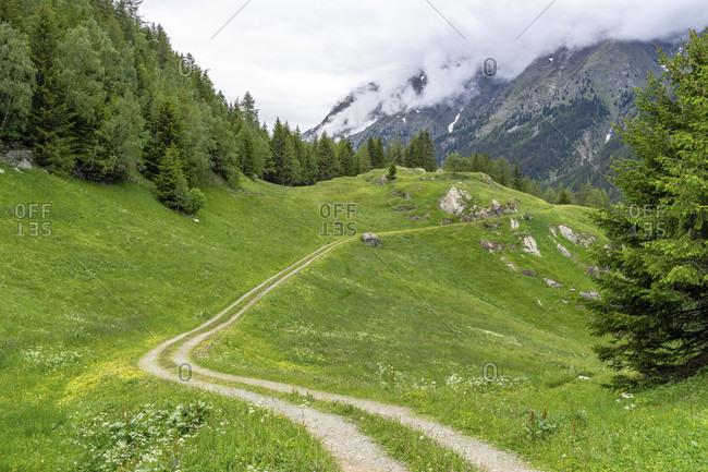 Europe, austria, tyrol, otztal alps, otztal, hiking trail through a mountain meadow at the hochwald mountain inn in the otztal