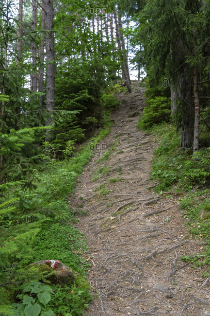 Europe, austria, tyrol, otztal alps, otztal, hiking trail in the mountain forest near ambach in the otztal