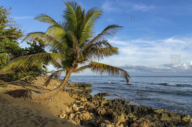 America, caribbean, greater antilles, dominican republic, cabarete, palm tree on the beach of the natura cabana boutique hotel & spa