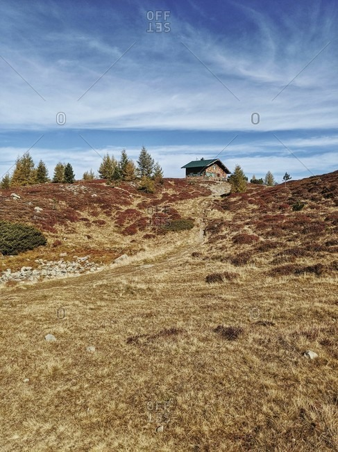 On the way on the tyrolean stone pine path, hut, autumn colored heather soils