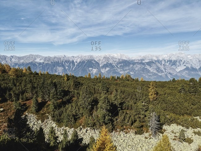 On the way on the tyrolean stone pine path, view of the karwendel massif, in the foreground a stone pine forest